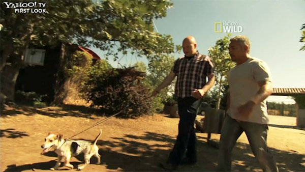 Cesar Millan helps hyper pooch on 'Leader of the Pack' [Exclusive video]