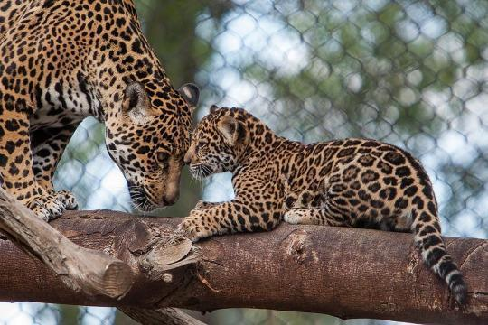 Go Wild! The Best Zoo in Every State