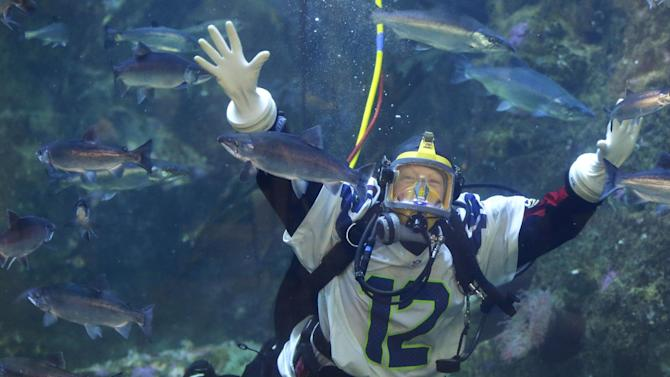 Nicole Killebrew wears a Seattle Seahawks jersey as she dives with salmon and other fish in the Seattle Aquarium's Window on Washington Waters tank, Friday, Jan. 30, 2015, in Seattle. The Aquarium was showing support for the Seahawks, who will face the New England Patriots in NFL football's Super Bowl XLIX on Sunday, Feb. 1, 2015, in Glendale, Ariz. (AP Photo/Ted S. Warren)