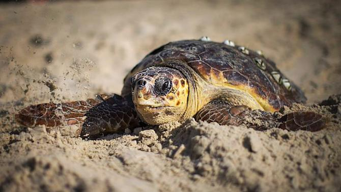 U.S. Cracks Down on Mexican Seafood After Turtle Deaths