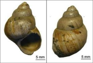 Ancient Snail Shells Hint at Future Global Warming