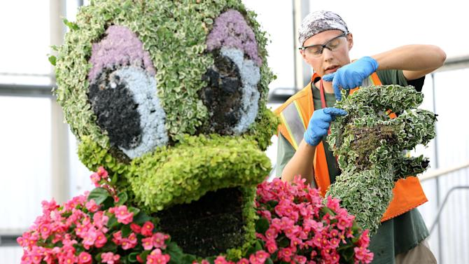 This undated image released by Disney shows a topiary specialist working on a Daisy Duck topiary, which will be featured as part of the Party with Mickey and Friends character topiary scene at the Epcot front entrance from March 6 thru May 19 during the 20th Epcot International Flower & Garden Festival at Walt Disney World Resort in Lake Buena Vista, Fla. (AP Photo/Disney, Gregg Newton)