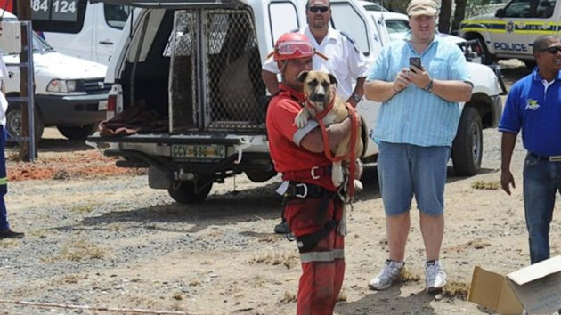 'Underdog' Rescued From Plunge into Open Pit Diamond Mine (ABC News)