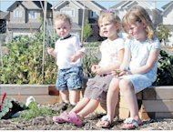 Group gardens help Calgarians achieve sense of community