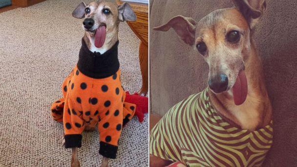 Rescue Dog's 'Supa Tongue' Becomes Fashion Statement
