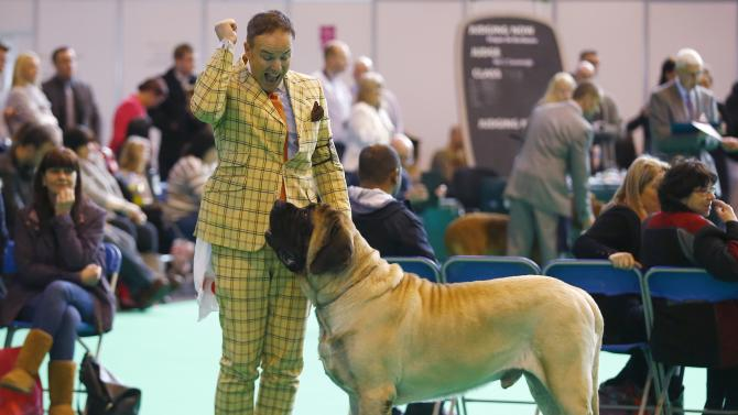 A handler celebrates the first place awarded to his Mastiff during the second day of the Crufts Dog Show in Birmingham