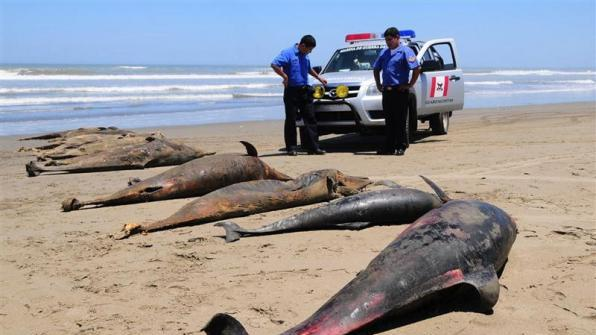 Unexplained deaths in Peru