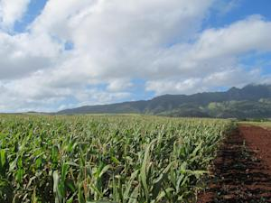 In this April 16, 2014 photo, the Waianae mountains …