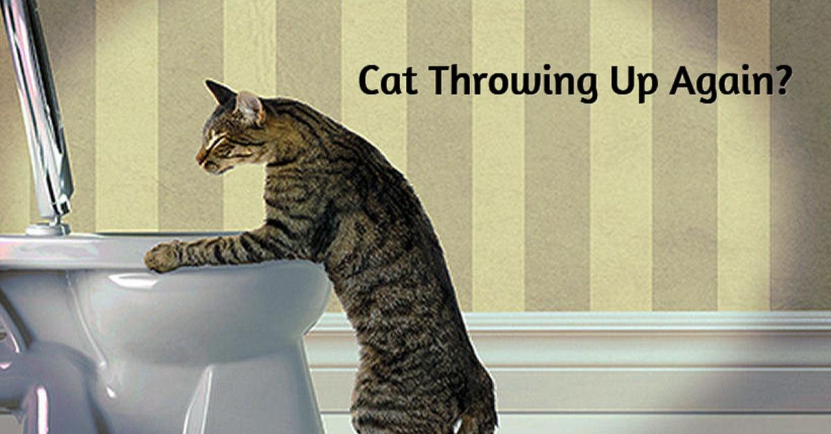 Does Your Cat Vomit Frequently?