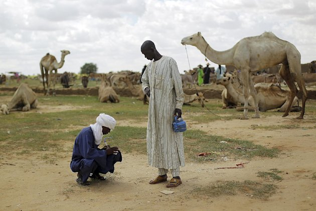 In this picture taken Tuesday, July 17, 2012, a Nigerian taxman records the sale of a camel at the market in Bermo, Niger, 200 kms (125 miles) north of Maradi. This is a region where it is in livestock that a man settles disputes, pays the dowry for his future bride and leaves inheritance to his sons. For generations, nomads have lived in a precarious equilibrium with the sky above them. When the first rains come, they head north toward the Sahara desert, where the grass is said to be saltier, packed with minerals. They time their movements according to the clouds, waiting for the second major downpour, before making a U-turn to head back to the greener south. (AP Photo/Jerome Delay)