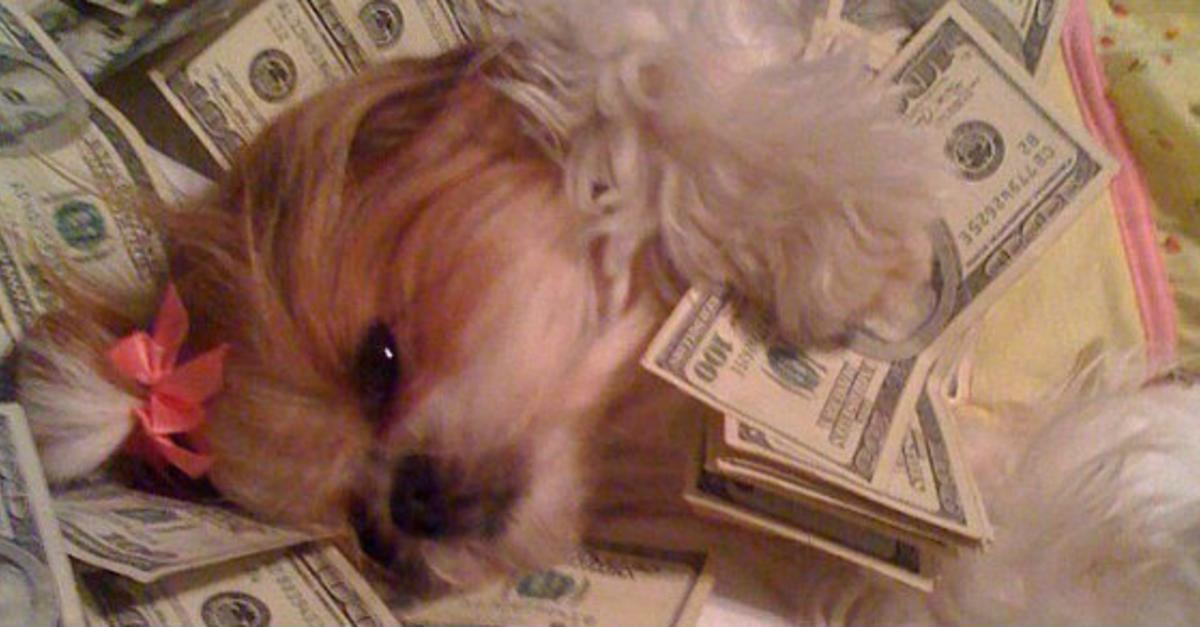 12 Rich Dogs Who Are Really Living The High Life