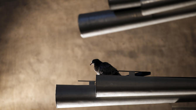 In this Thursday, May 2, 2013 photo, a pigeon roosts on an organ pipe at Notre Dame cathedral in Paris. The organ was refurbished for the cathedral's 850th anniversary this year. (AP Photo/Christophe Ena)