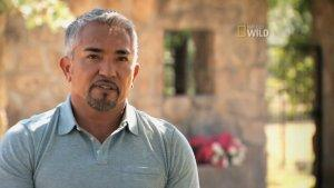 Cesar Millan's 'Leader of the Pack' Sneak Peek Debuts (Exclusive Video)