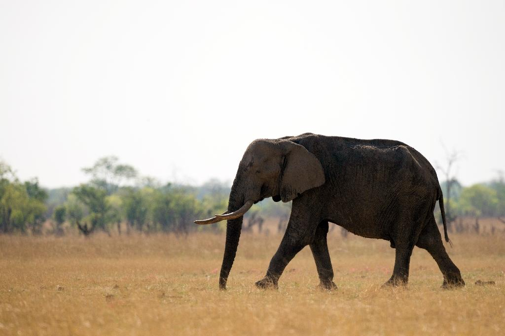 Four killed trying to stop elephant poachers in Congo