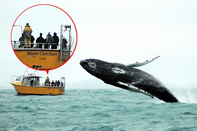 Turn around: The lifeboat crew are unaware of the stunning whale leap behind them (Caters)