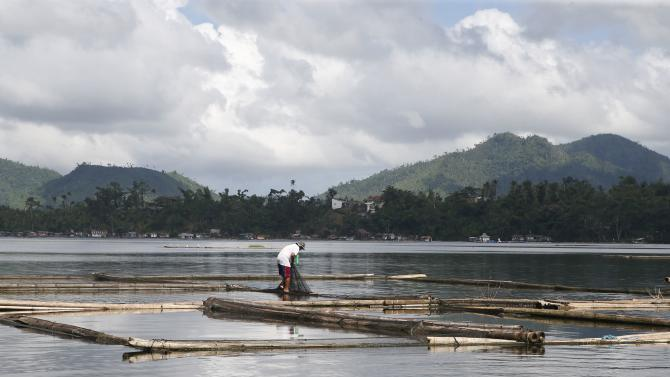 A fisherman checks a net containing 'Tilapia' fingerlings at a fish farm at Sampaloc Lake in San Pablo city, south of Manila