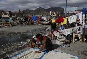 A typhoon survivor dries rice outside the Tacloban…