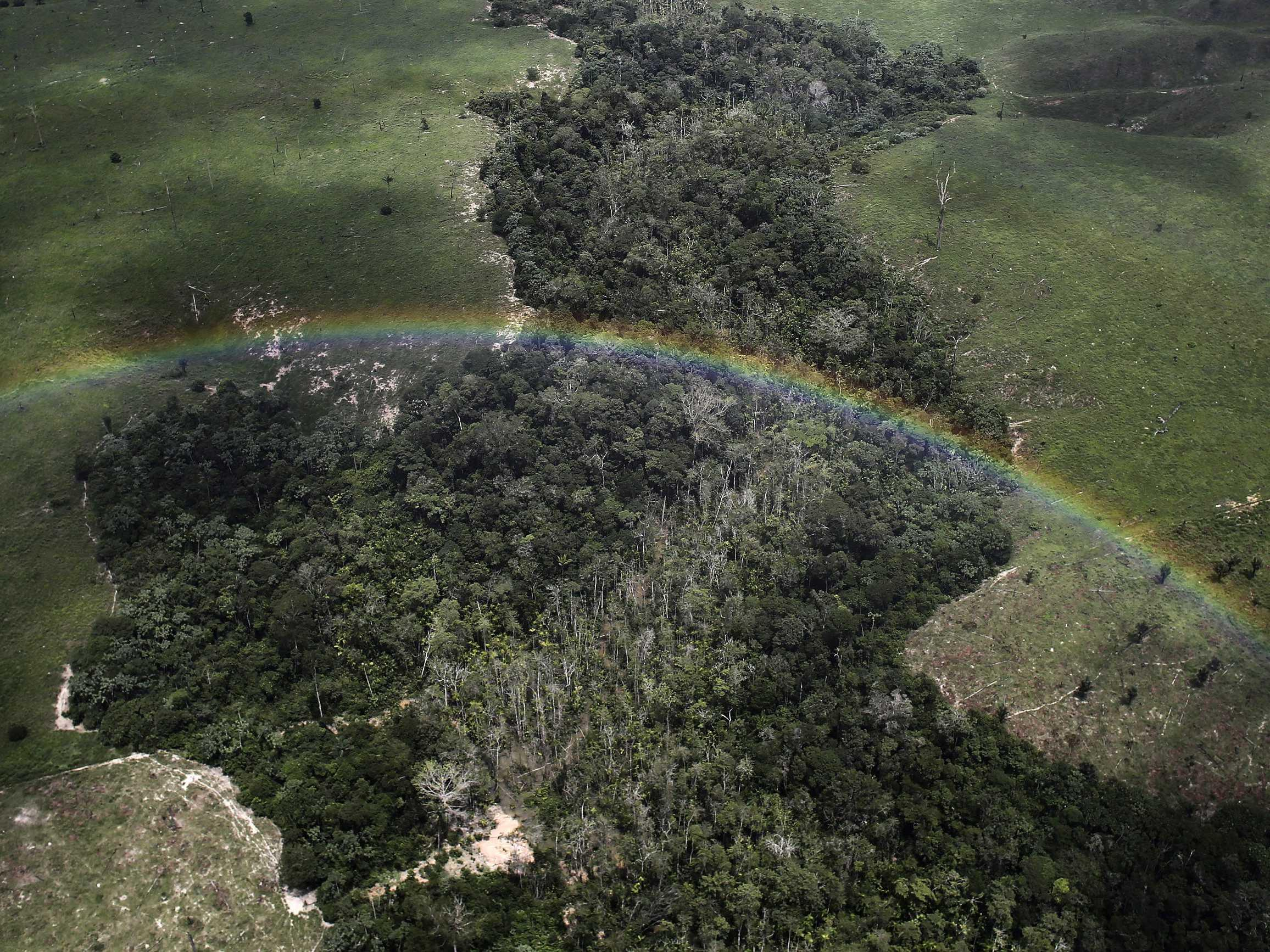 NASA has a plan to take the most detailed scans of the world's forests ever