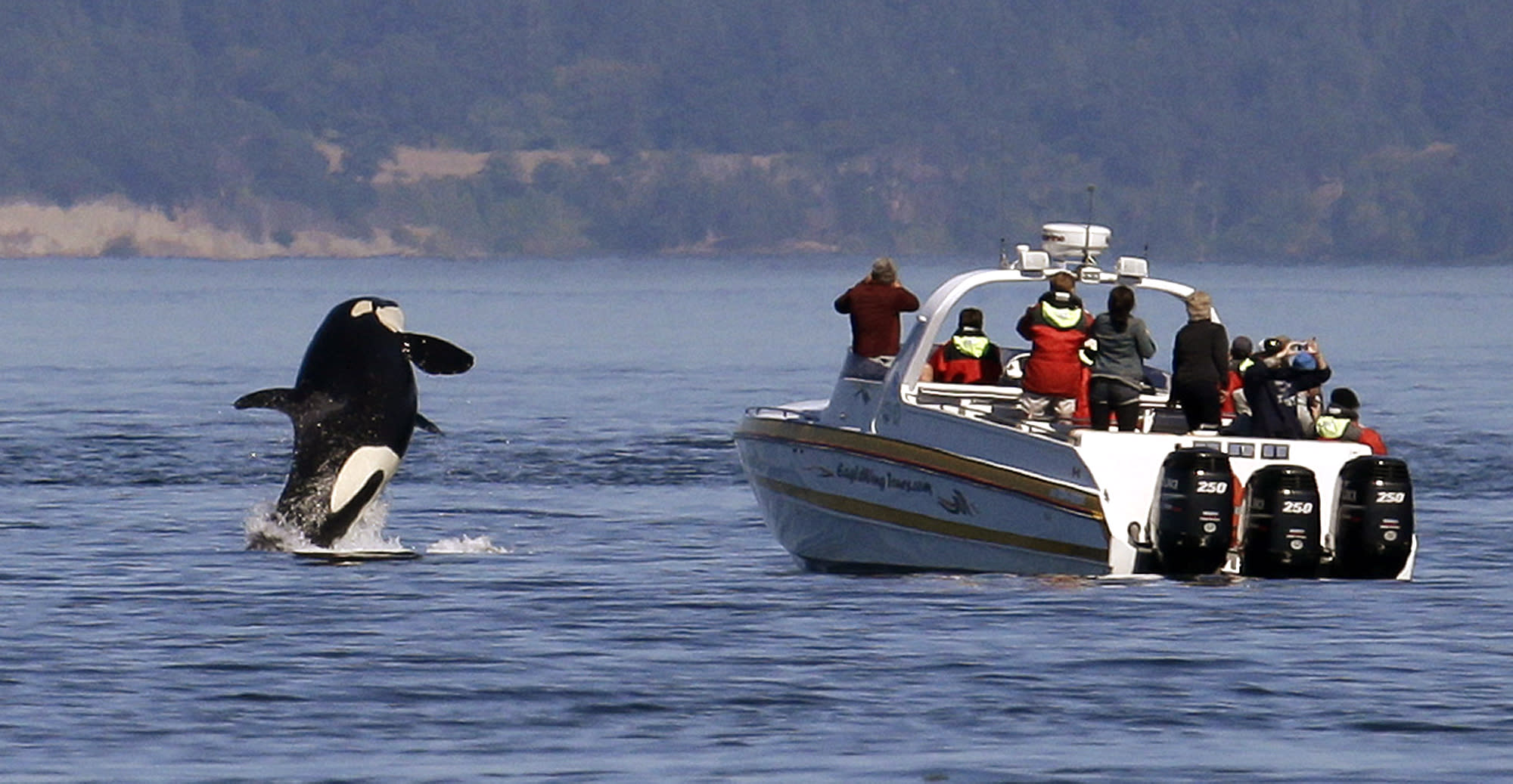 To protect killer whales, patrols keep boaters in check