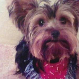 Dog found in Indiana six years after it went missing in Texas