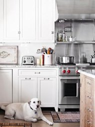 white kitchen with white dog on the floor