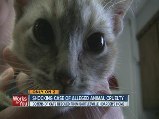 Bartlesville cats rescued from hoarder