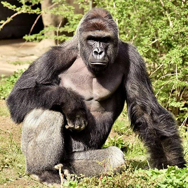 Mom of 4-Year-Old Who Climbed into Zoo Pen Defends Herself from Backlash After Zookeepers Killed Gorilla