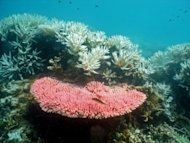 Bleaching on a coral reef at Halfway Island in Australia's Great Barrier Reef. The Australian government admits the Great Barrier Reef has been neglected for decades after a study showed it has lost more than half its coral cover in the past 27 years