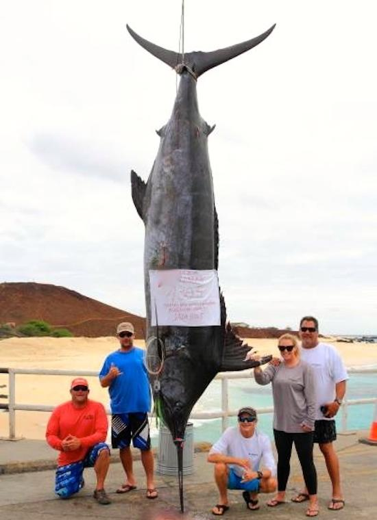 1,305-pound blue marlin is largest ever caught by a woman; a probable world record