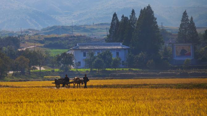 FILE - In this Oct. 8, 2011 file photo, North Korean farmers walk along a road through a farm field outside the eastern coastal city of Wonsan, in Kangwon province,  North Korea. Deep in the North Korean countryside, in remote villages in Ryanggang province that outsiders seldom reach, farmers are now said to be given nearly one-third of their harvests to sell at market prices. Collective farms are reportedly being reorganized into something closer to family farms. State propagandists are expounding the glories of change under the country's new young leader, although no outsiders are known to have been to the villages, since the new policies reportedly went into effect.  (AP Photo/David Guttenfelder, File)