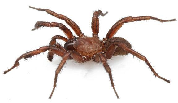 New Spider Species Discovered in Alabama Housing Subdivision
