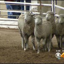 Stock Show A Huge Success, Plans Call For An Even Bigger Event