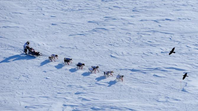 Aliy Zirkle drives her team toward the Elim, Alaska, checkpoint during the Iditarod Trail Sled Dog Race on Monday, March 12, 2012. (AP Photo/Anchorage Daily News, Marc Lester)