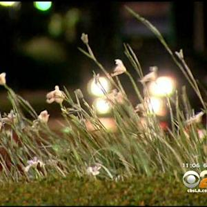 Strong Winds Pose Fire Danger In Southland