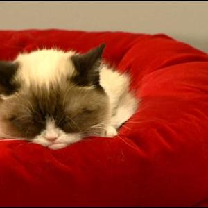 Grumpy Cat Makes Live Appearance In San Francisco Macy's Holiday Window