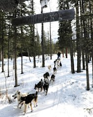 In this March 5, 2013 photo, Iditarod rookie Christine Roalofs arrives at the Rohn checkpoint in Alaska during the Iditarod Trail Sled Dog Race. (AP Photo/The Anchorage Daily News, Bill Roth)