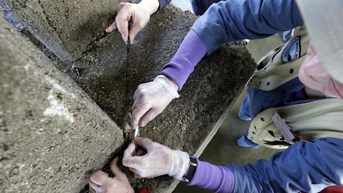 In this photo taken April 9, 2015, volunteers reach to measure tiny baby sea stars clinging to a concrete piling on Washington's Hood Canal near Poulsbo, Wash. Researchers say that there's evidence that juvenile sea stars, while not entirely immune, may be less susceptible to a virus fingered as the likely culprit of the sea star wasting disease, a sickness that has devastated about 20 species of sea stars from Alaska to Baja California since it was first reported off the Washington coast in June 2013. (AP Photo/Elaine Thompson)