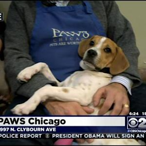 What Does It Take To Be A PAWS Chicago Volunteer?