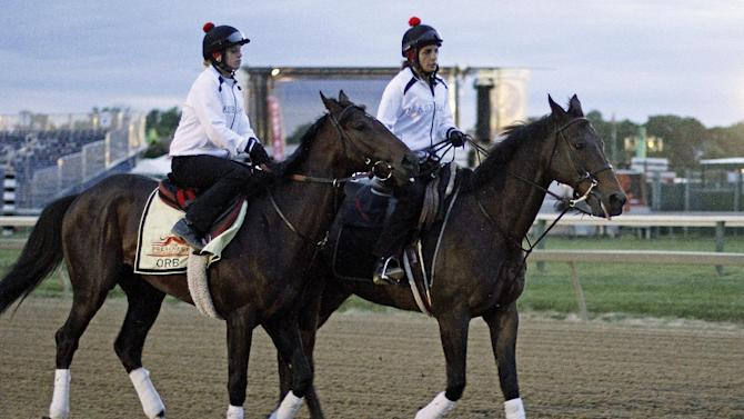 Kentucky Derby winner Orb, left, with exercise rider Jenn Patterson aboard, is led to the track by Anna Martinovsky on a pony for an early morning gallop at Pimlico Race Course Saturday, May 18, 2013 in Baltimore. (AP Photo/Garry Jones)