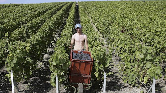 FILE In this Aug.30 2007 file photo, a worker uses a wheelbarrow to carry boxes of Pinot Noir grapes during the grape harvest of Roederer Champagne in Ay, in the Champagne production area of Epernay, near Reims, eastern France.  Europeans are finding fewer reasons to pop open a bottle of Champagne as another year of economic troubles and high unemployment saps the region's joie de vivre, latest industry figures show. But while a taste for a glass of bubbly might be on the wane in Europe, other markets, particularly Japan and the United States, are developing a growing taste for sparkling luxury with a brand name. (AP Photo/Francois Mori, File)