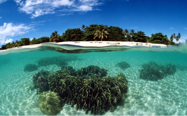 Coral reef, Turtle Islands. Philippines Copyright:               Jurgen Freund / WWF-Canon