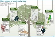 Illustration of the main causes of biodiversity loss, with examples of endangered species. An island-dwelling cockroach and a tiny snail were declared extinct while 400 plants and animals were added to a threatened &quot;Red List&quot; as global environment ministers met in India