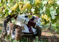 A picture taken on September 13, 2012 near Chalon-sur-Saone in France shows the Wall-Ye V.I.N. robot being used in vineyards. The robot, brainchild of Burgundy-based inventor Christophe Millot, is among robots being developed around the world aimed at vineyards struggling to find the labour they need