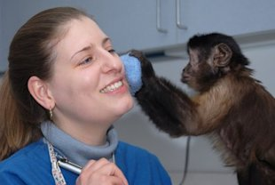 Helping Hands monkey trainers have the best job in the world. (via monkeyhelpers.org))