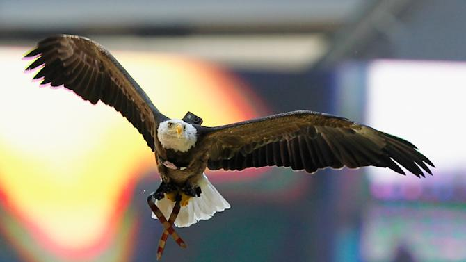 Incredible video from bald eagle wearing GoPro at Texans game