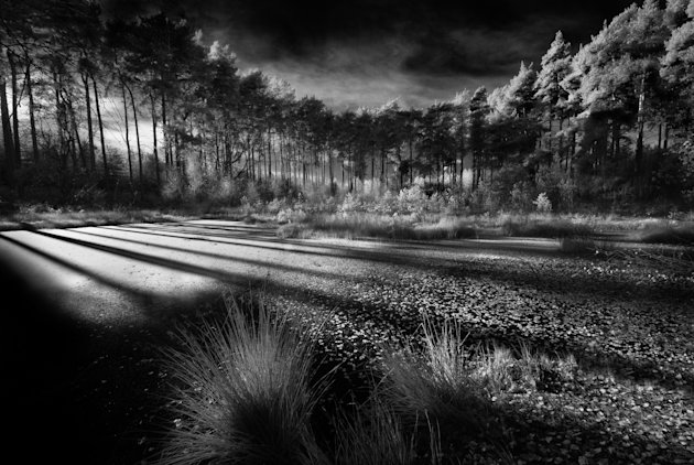 Delamere Forest, Cheshire: Another picture by overall winner David Byrne shows a spectacular group of trees, taken with a Nikkor 10-24mm lens. The picture was the winner of the 'Classic View' adult cl