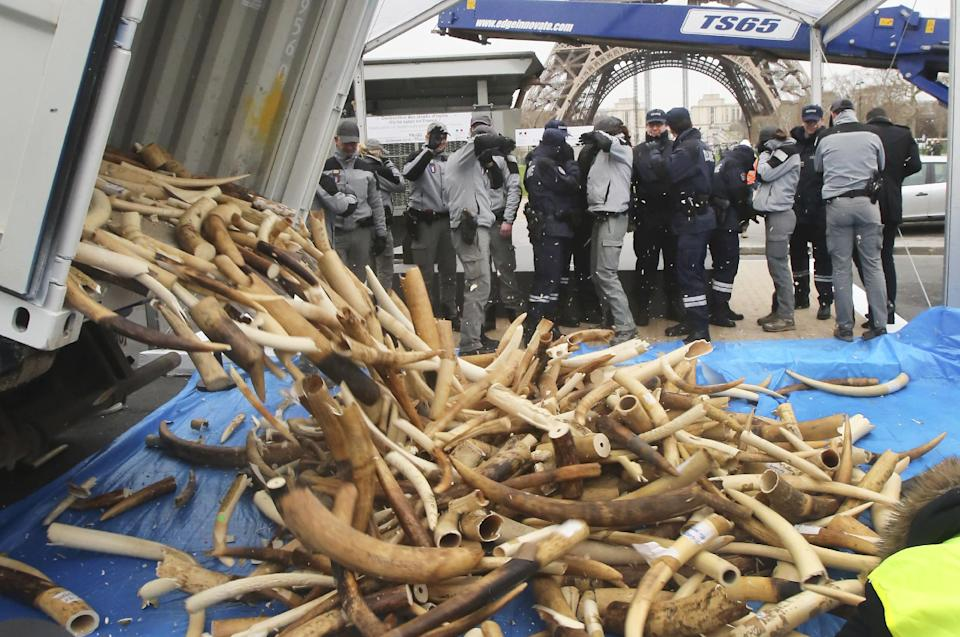 3 tons of seized illegal ivory crushed in Paris