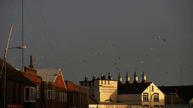 Gulls circle above a fish smoking facility in Grimsby, Britain