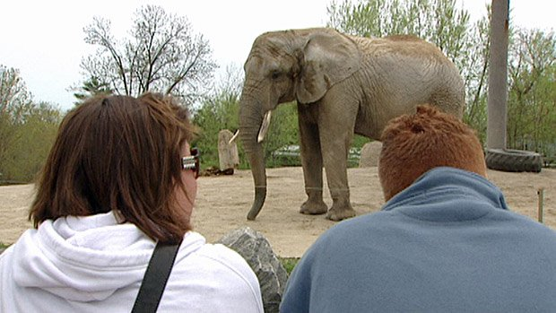 The three elephants at the Toronto Zoo are supposed to be transferred to a California sanctuary, but the process has been postponed again.