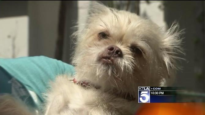 WeHo Considers Making It Illegal to Leave Animals in Cars on Hot Days